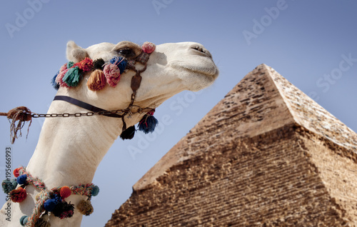 Giza pyramids, Cairo, Egyptand a camel