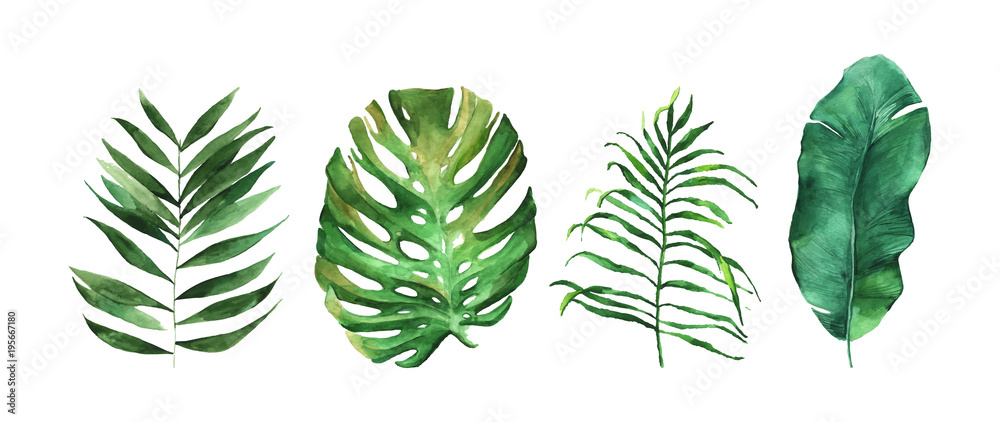 Fototapeta Four beautiful tropical leaves vector illustration isolated on the white background. Hand drawn leaves illustration in watercolor technique.