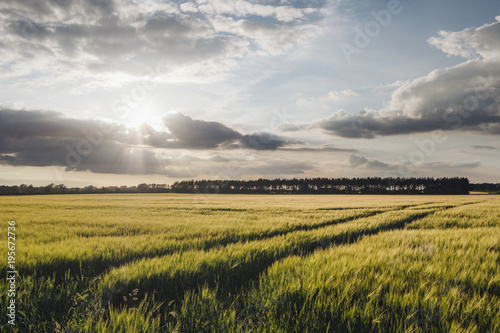 Sunset and clouds over a field of Barley. Norfolk, UK.