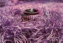 Small Fountain In An Overgrown Purple Garden