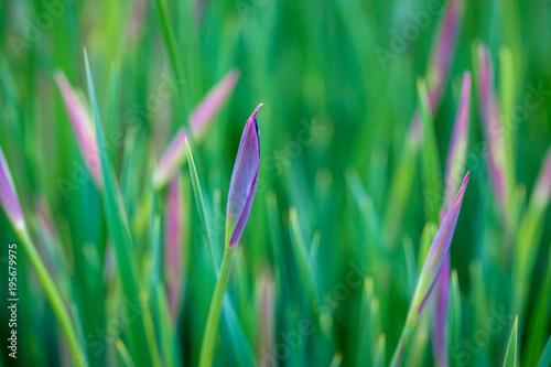 Close-up of ornamental grass