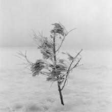 Small Tree In Winter