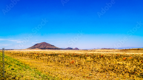 Honey Endless wide open landscape of the semi desert Karoo Region in Free State and Eastern Cape provinces in South Africa under blue sky