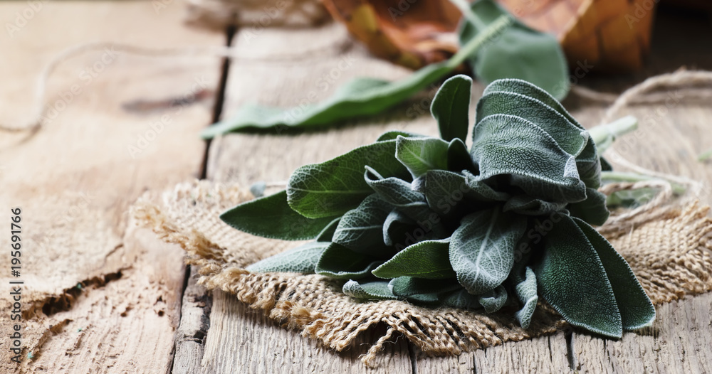 Fototapety, obrazy: Fresh Sage, rustic style, vintage wood background, selective focus