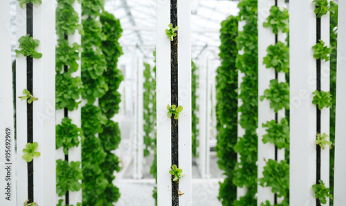 Greens grown vertically and sustainably using aquaponics