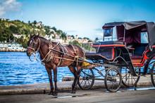 HDR - Karibik Kuba Havanna Kutsche Mit Pferd - Serie Kuba Reportage