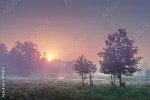 Fotomural A landscape of summer sunrise in misty morning with colorful sky on the horizon