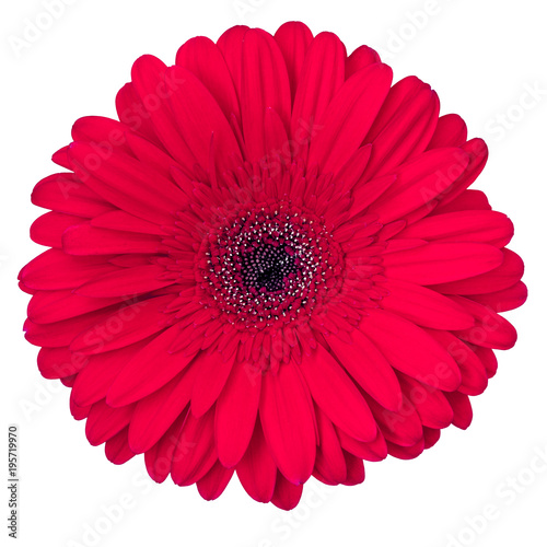 Fotobehang Gerbera red gerbera flower isolated on white background, view from above