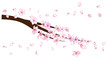 Realistic Cherry Branch Illustration Vector. Blooming Sakura, Apricot, Peach, Apple Twig Blossoms Petals Falling Down Isolated. Realistic Blossom Cherry Branch, Showering Petals, Wedding Decoration