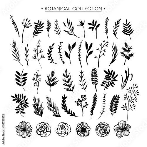Foto  Botanical collection