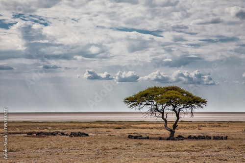 Staande foto Bleke violet The big Etosha Pan in Etosha National Park in Namibia with a herd of wildebeest under a acacia