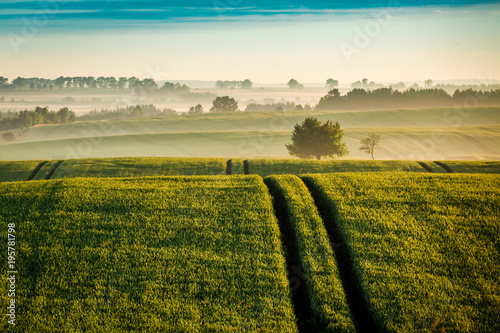 Foto auf Gartenposter Landschappen Foggy sunrise at green field in spring, Europe