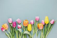 Fresh Tulips On Gray