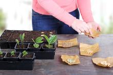 Women Planting Vegetable Seeds In Springtime