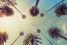 Los Angeles Palm Trees On Sunn...
