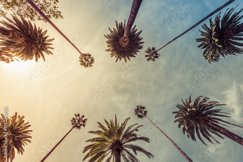 Los Angeles palm trees, low angle shot. Sun rays Fototapeta