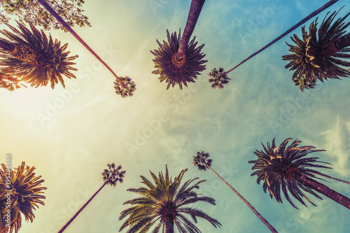 Poster Palmier Los Angeles palm trees on sunny sky background, low angle shot. Vintage tone
