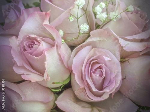 Wall Murals Floral Bouquet of fresh light pink roses
