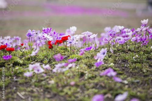 Tuinposter Purper 春の目覚め