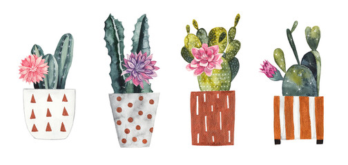 Plakat Watercolor cacti in decorative flower pots on white isolated background