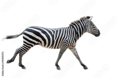 Cadres-photo bureau Zebra Zebra,