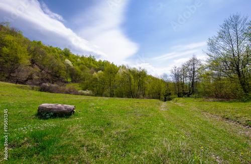 Plakat Zaloguj się na trawiastej łące pośród lasu. piękna sceneria przyrody na wiosnę