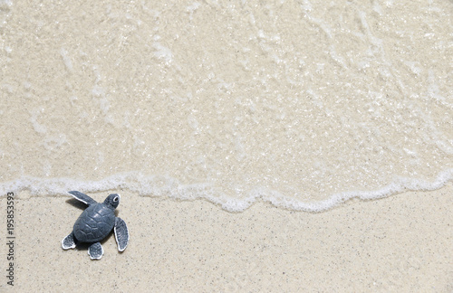 Keuken foto achterwand Schildpad turtle baby On the beach Top view Copy space