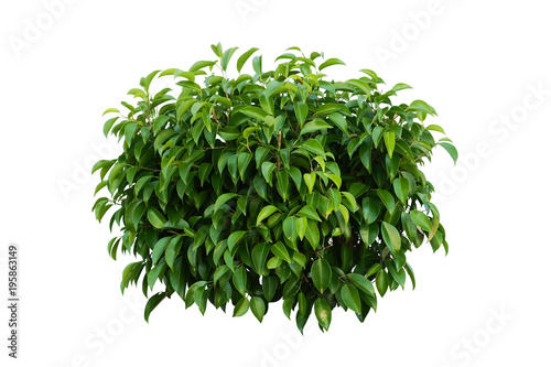 Leinwand Poster flower bush tree isolated with clipping path