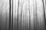 Widok na drewno. Poranna mgła między drzewami. Tło lasu - 195865958