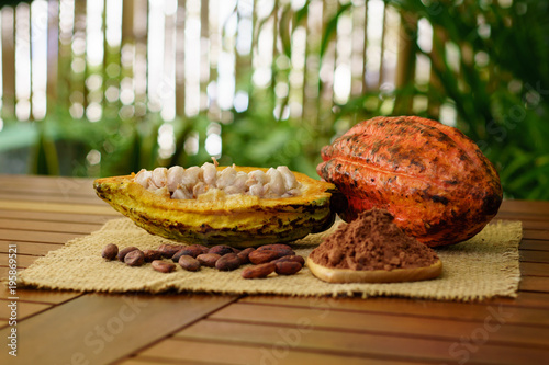 Cuadros en Lienzo Raw cocoa pods, cacao beans and powder on wooden table