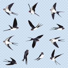 Set Of Many Simple Swallows