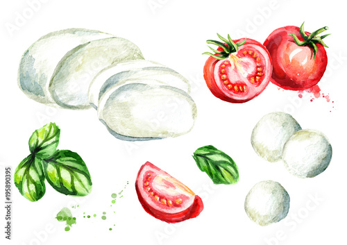 Fototapety, obrazy: Mozzarella cheese, Basil, tomatoes set. Watercolor hand drawn illustration, isolated on white background