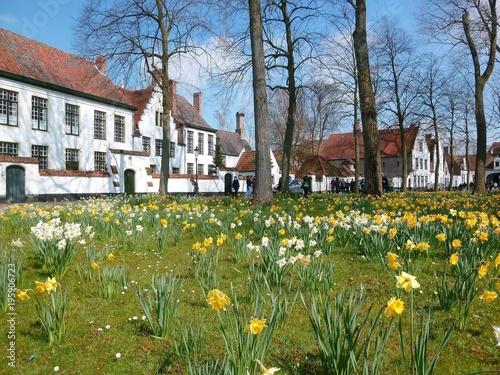 Fotobehang Brugge Enclos du béguinage de Bruges tapissé de jonquilles au printemps (Belgique)