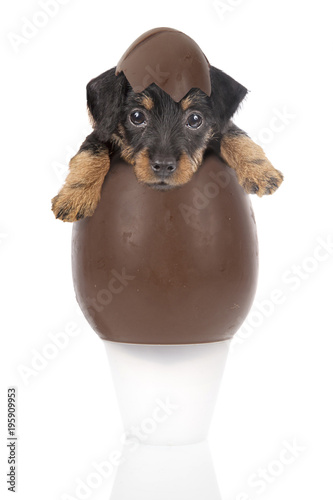 Chocolate egg with a cute puppy inside on a white background Canvas Print