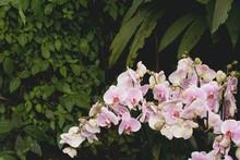 Růžové Květiny Orchidejí ...