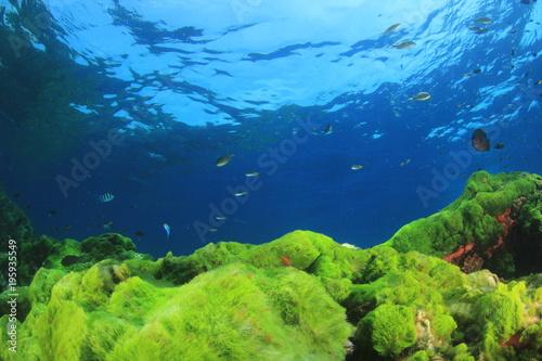 Plakat Zielonych alg niebieski ocean