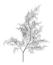 Flat   Computer Generated Self-Similar L-system Branching Tree Fractal  - Generative Art