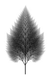 Flat   Computer Generated Self-Similar L-system Branching Tree Fractal  - Generative Art - 195936507