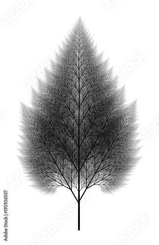 Fototapeta Flat   Computer Generated Self-Similar L-system Branching Tree Fractal  - Genera