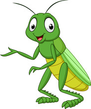 Cartoon Grasshopper Isolated O...