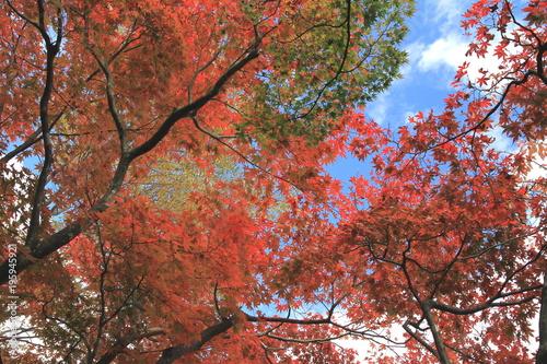 Keuken foto achterwand Rood paars 鮮やかな山間の紅葉