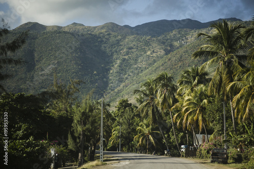 Fotografie, Obraz Haitian mountains, road with palm trees