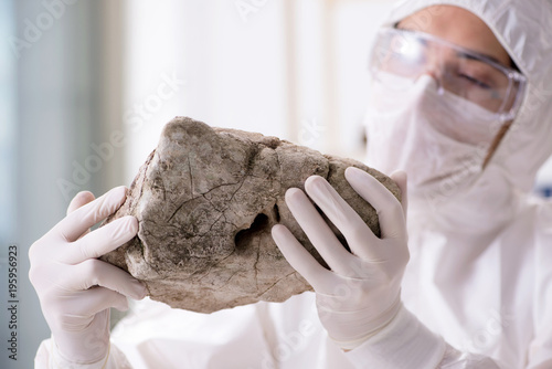 Scientist looking and stone samples in lab Canvas Print