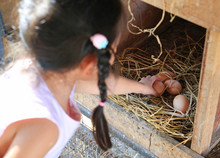 Child Keeping Eggs Lie On The ...