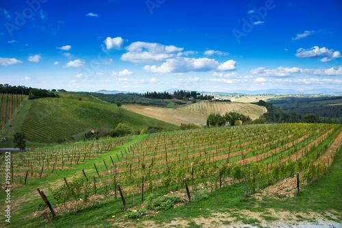 Papiers peints Vignoble Montalcino, vineyard, cypress trees and old farm. Tuscany, Italy Europe