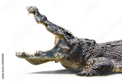 Tuinposter Krokodil Crocodile is open mouth.