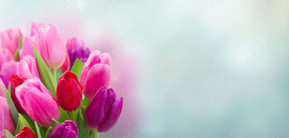 Fototapety, obrazy: bouquet of  pink and purple  tulip flowers