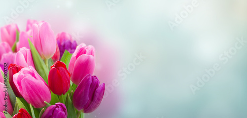 Spoed Foto op Canvas Tulp bouquet of pink and purple tulip flowers