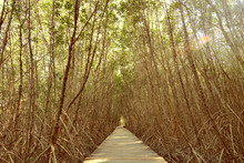 Wooden Straight Walkway In Man...