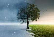 Baum Steht Halb Im Winter Und ...